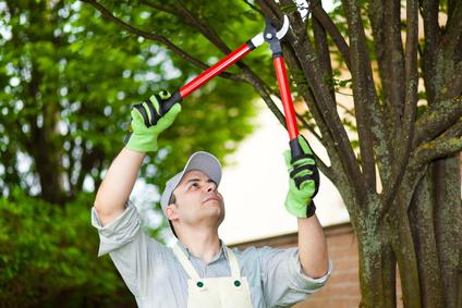 Services domicile m nage repassage sur lyon for Service a domicile jardinage